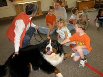 A large Saint Bernard dog named Riley visiting with Quad City Montessori School students and laying on the floor to be pet